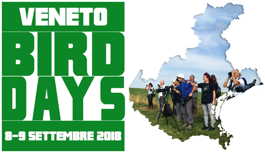 BIRD DAY VENETO