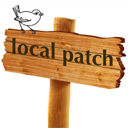 local patch